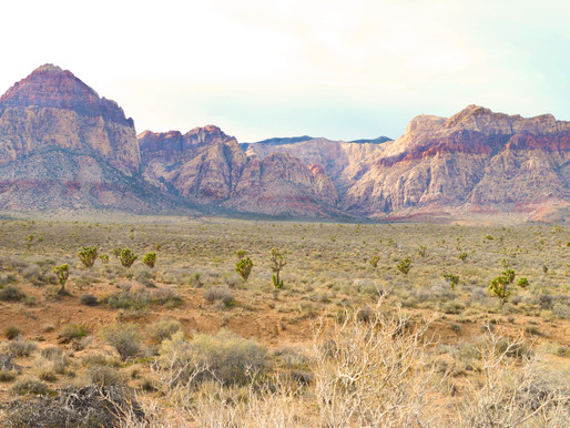 Red Rock Canyon: Oasis in the Mojave