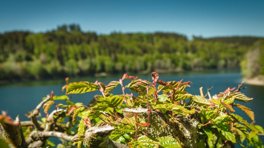 Olef Water Reservoir   Eifel National Park