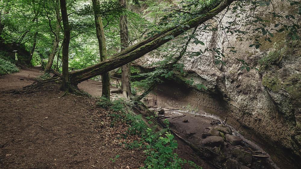 Wolfs Gorge | Eifel | HolgerOlivier Landscape & Travel Photography