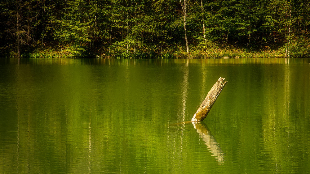 Pile in the river | River Enns | Gesäuse National Park | HolgerOlivier Photography