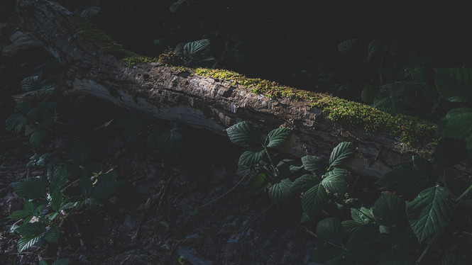 Light on tree trunk