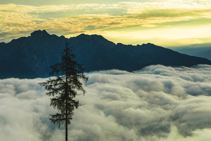 Tree above the Clouds
