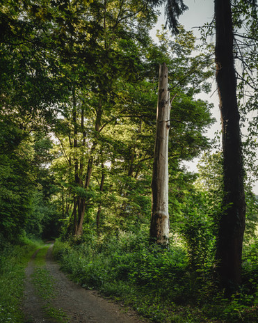 Broken Tree | Sieg Steig