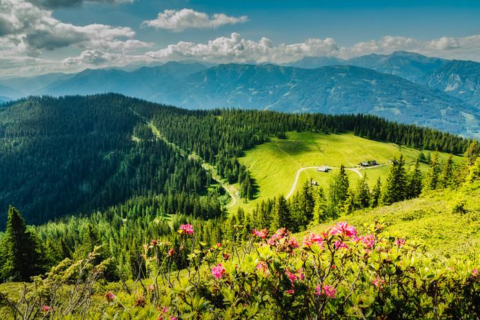 Wagenbänk Alm | Lahngang Hike