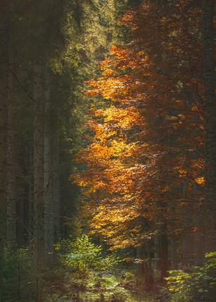 Autumn Colors at Öden LAake