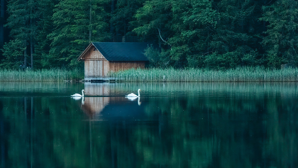 Hut & Swans | Leopoldsteiner Lake | HolgerOlivier Landscape & Travel Photography