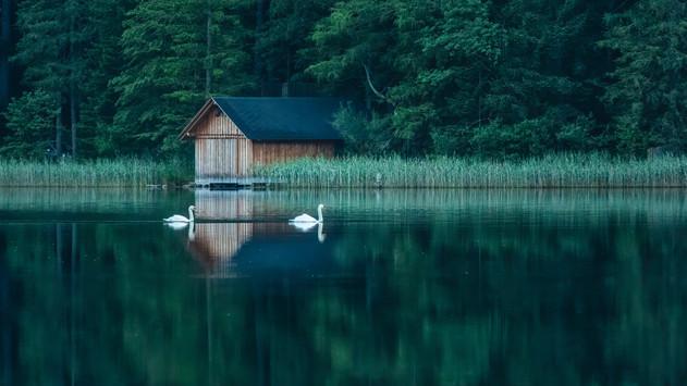Hut & Swans | Leopoldsteiner Lake