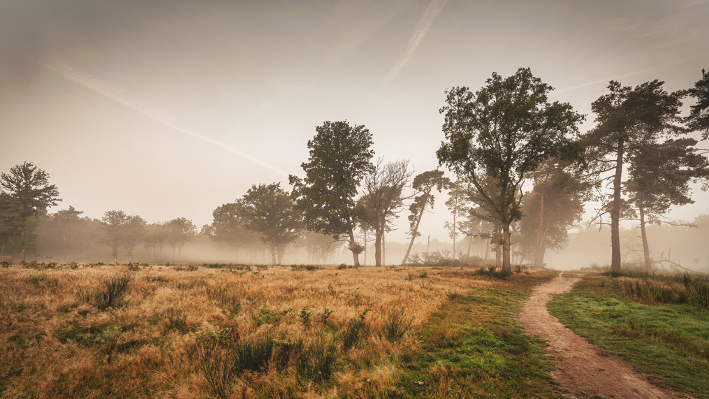 Heathland Wahn