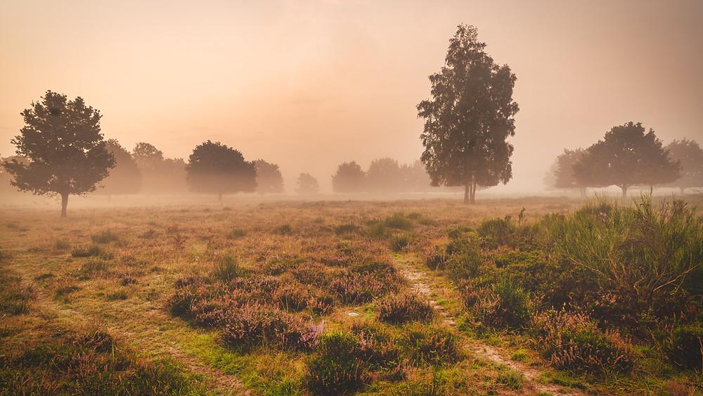 Heathland  Wahn   HolgerOlivier Landscape & Travel Photography