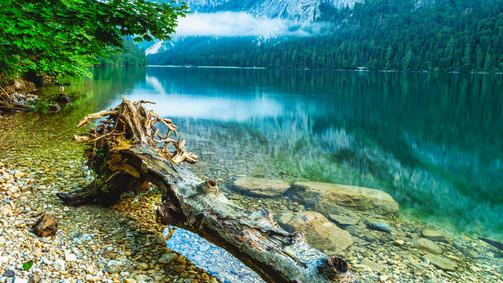Tree trunk | Leopoldsteiner Lake
