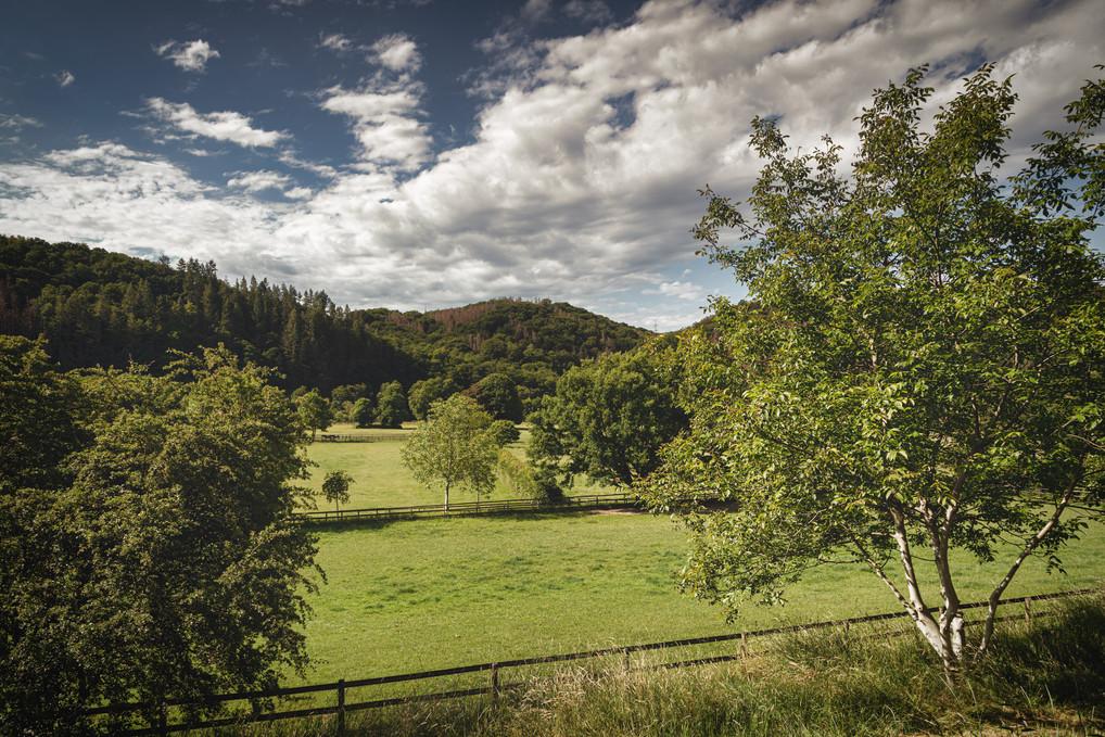 River Sieg meadow near Merten