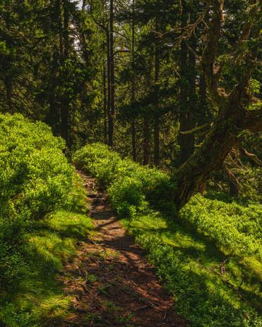Lahngang   Woodlands