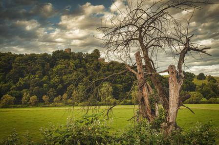 Dead Tree with Castle Ruine Blankenberg