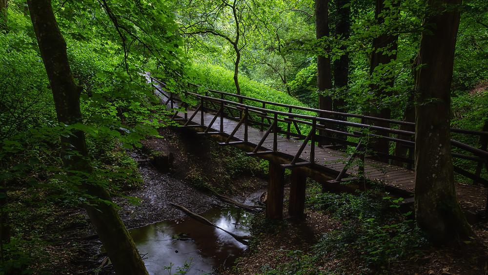 Pönter Valley | Eifel | HolgerOlivier Landscape & Travel Photography