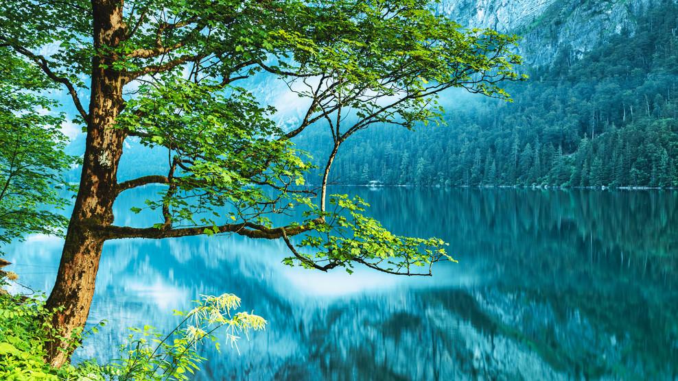 Tree at Leopoldsteiner Lake