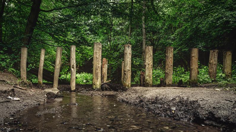 Wolfs Gorge | Dream Path | Eifel