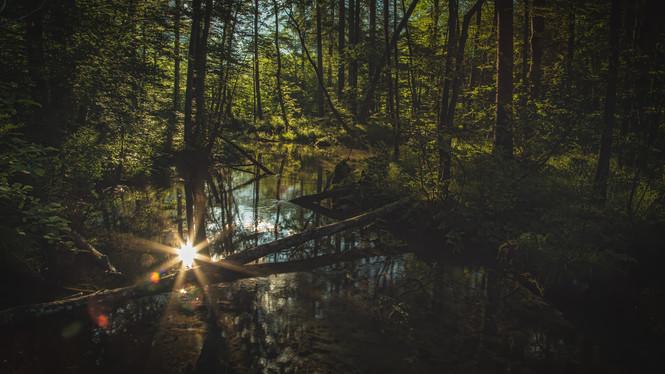Sunrise | Woodlands | Leopoldsteiner Lake
