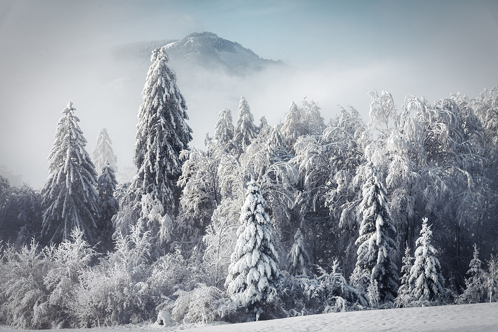 Buchau | Winter Dress | Styria | Austria | HolgerOlivier Photography