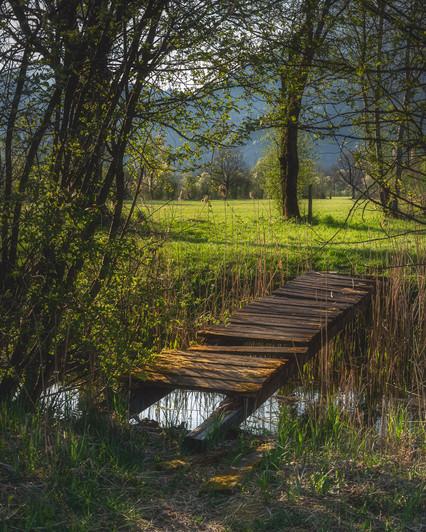 Jetty over Pond