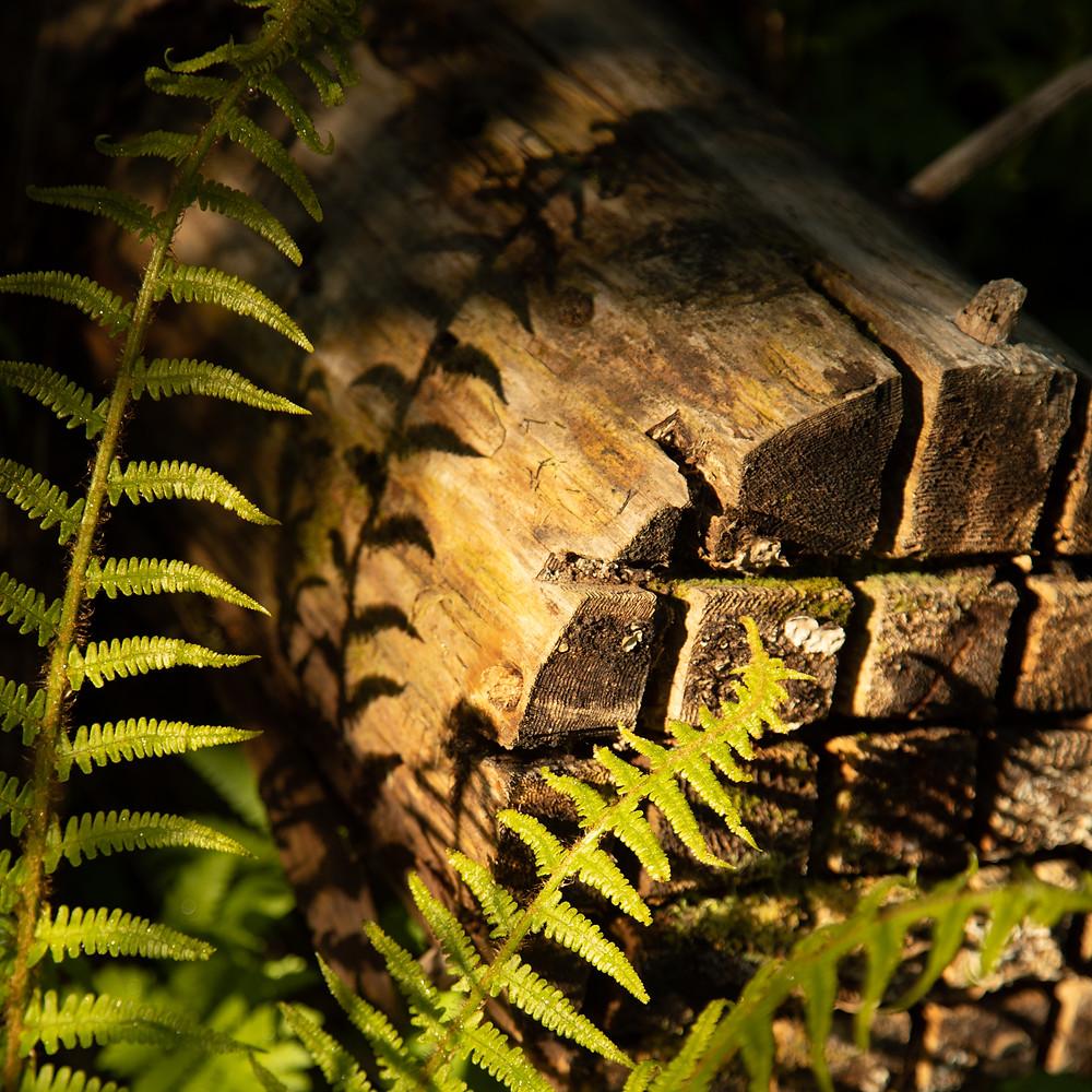 Light & Shadow | Fern | Gesäuse National Park | HolgerOlivier Photography
