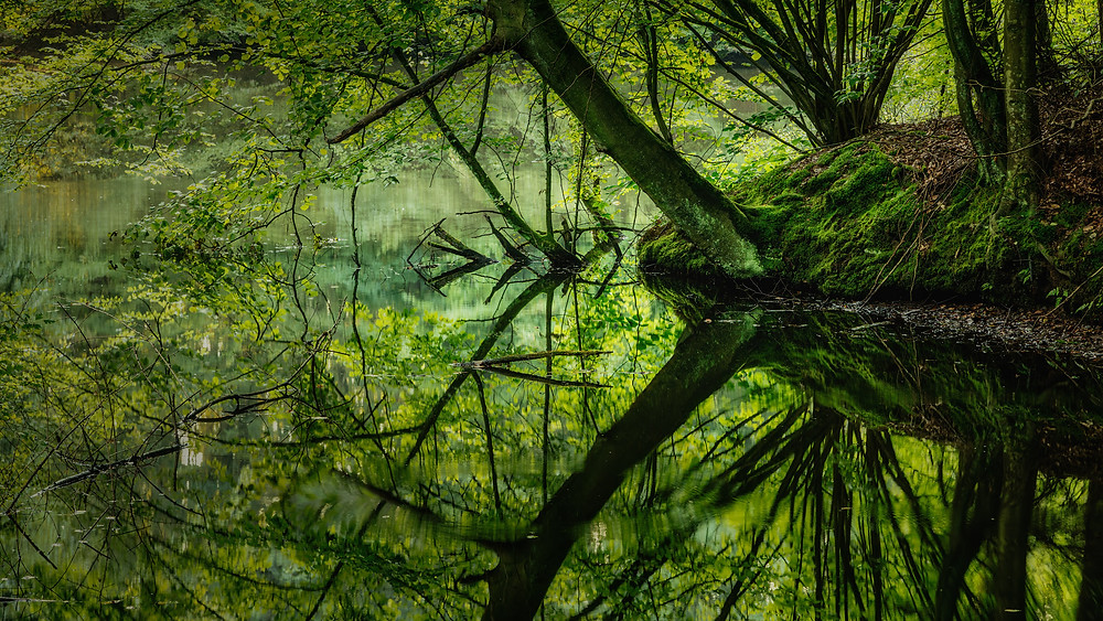 Ponds | Wahnerheide | HolgerOlivier Photography