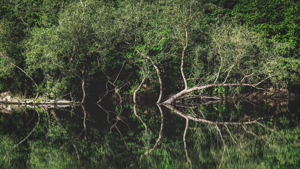 Reflections | River Sieg