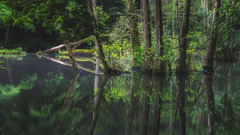 Trees in Pond