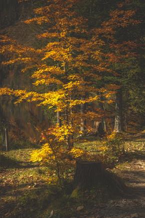 Autumn Colors at Öden Lake