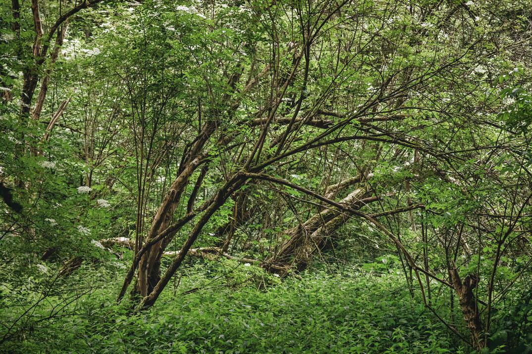 Woodlands | Pönter Valley