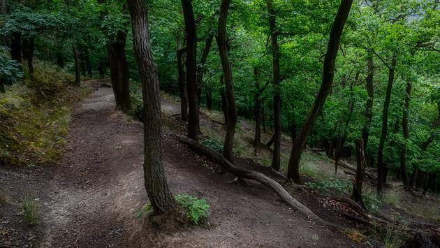 Woodlands | Dream Path | Eifel