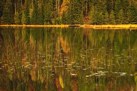 Shore area Spechten lake