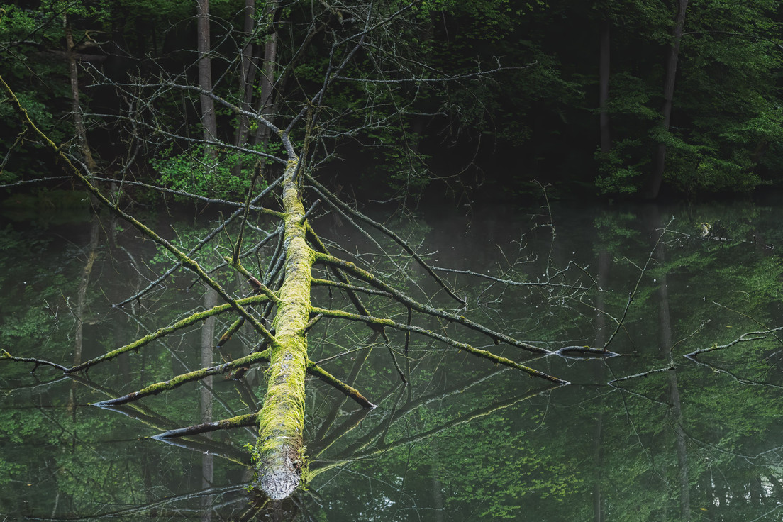 Fallen Tree in Pond