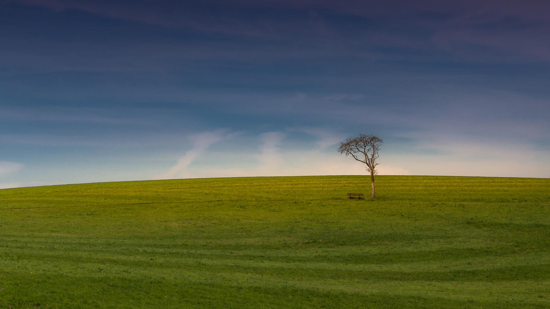 Baum | Wahnbachtalsperre