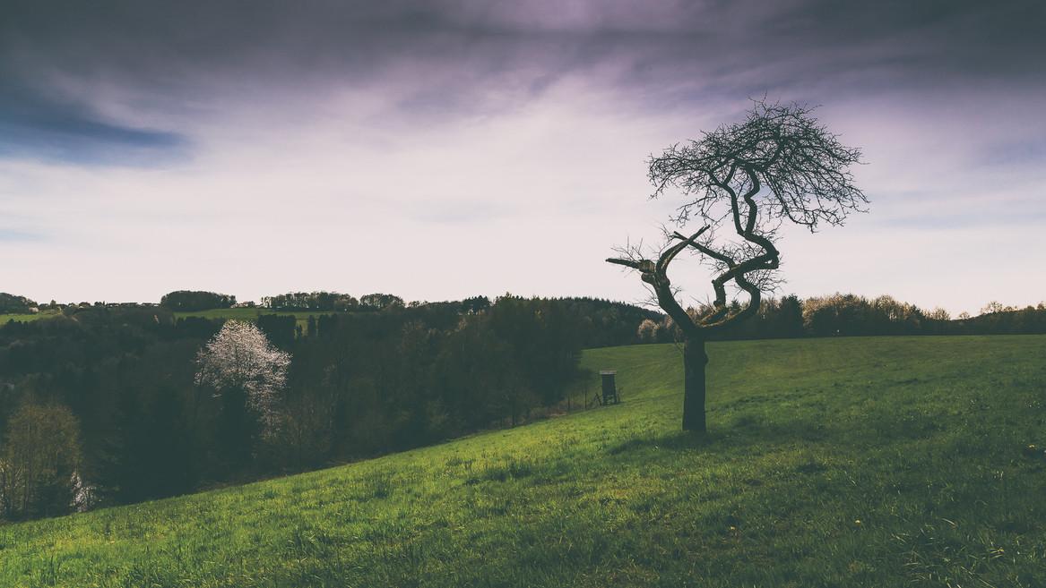 Germany | Tree