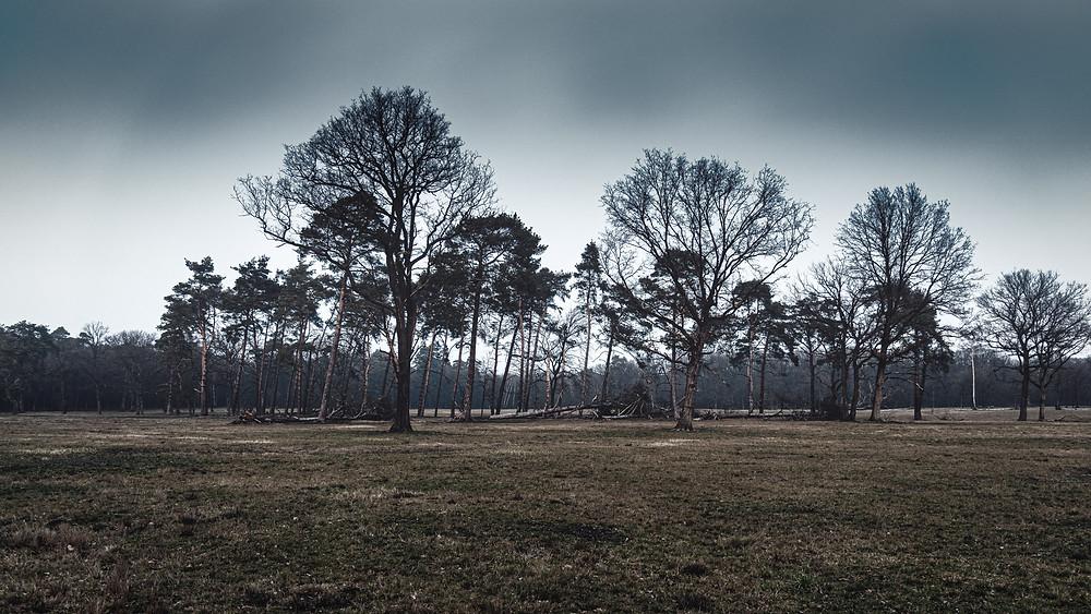 Wahner Heide  | HolgerOlivier Photography