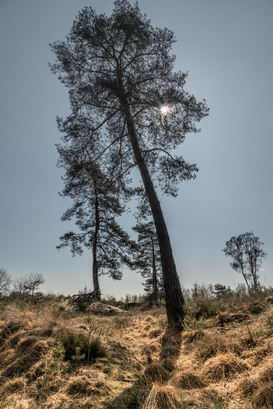 Tree in Wahner Heathland | HolgerOlivier Photography