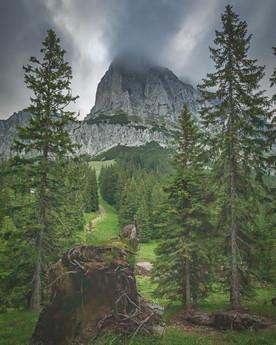 Mountain Kalbling