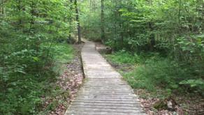 Paths ~ summer reset