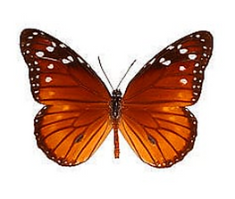 ButterflyDan's.png