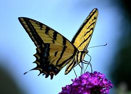Butterfly Dan's.jpg