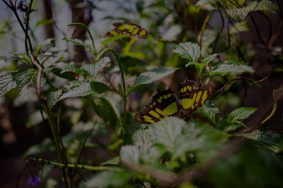 Butterfly%20Dan's%20Butterfly%20Farm_edi