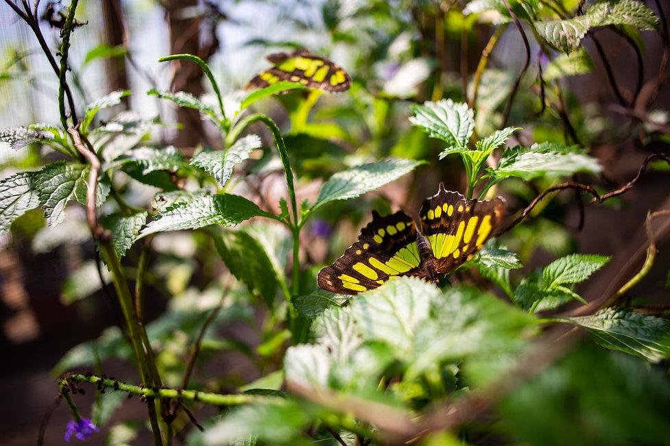 Butterfly Dan's Butterfly Farm.jpg