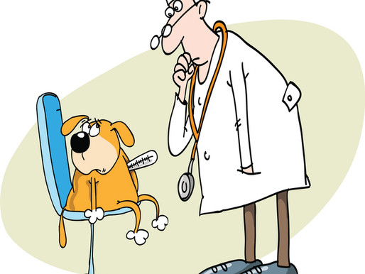Canine Cough - Can It Be Prevented?
