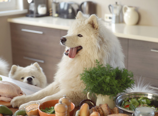 Your Dog Is What It Eats!