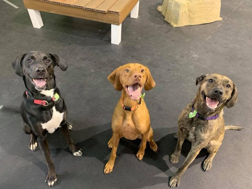 Happy Times In Agility Room