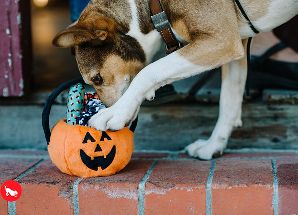 A Halloween Basket for Your Pup!