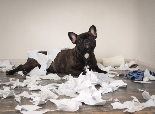 Keep Your Pup out of the garbage can -- tips for helping your pup deal with separation anxiety