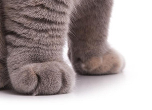 Paws Off: Do Not Declaw Your Cat