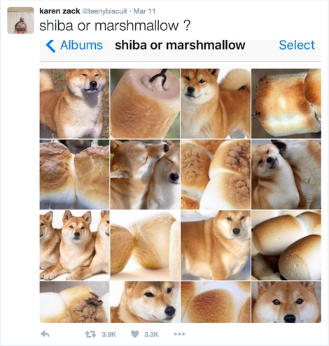 Animal Or Food The Internet S New Favorite Meme