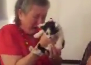 Students Surprise Teacher with Kittens